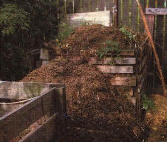 Der Kompost ( lat. compositus = Zusammengesetztes )
